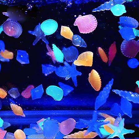 ... concha resplandor en el paisaje oscuro piedras noctilucentes adoquines para la decoración del florero tanque de peces de acuario: Amazon.es: Hogar