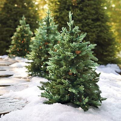 set of two 3 hyde park pathway outdoor christmas trees transparent frontgate christmas decor - Frontgate Christmas Tree Reviews