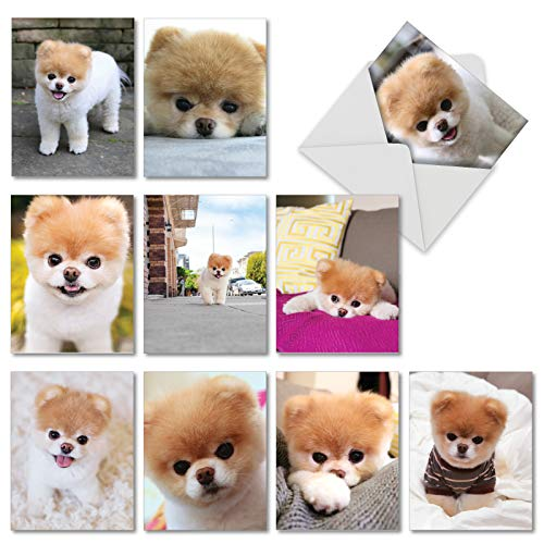 10 Assorted Boo The Worlds Cutest Dog Blank All Occasion Notecards 4 x 5.12 inch w/Envelopes - Internet Famous, Adorable Pomeranian Puppy - Cards for Any Holiday, Event or Party AM6755OCB-B1x10