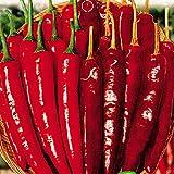 Go Garden BELLFARM Bonsai Red Dried Hot Chili Hunan Pepper Edible Vegetables High Germination -30pcs/Pack