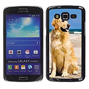 - Golden Retriever Dog - - Hard Plastic Protective Aluminum Back Case Skin Cover FOR Samsung GALAXY Grand 2 g7106 g7108v g7109 Queen Pattern