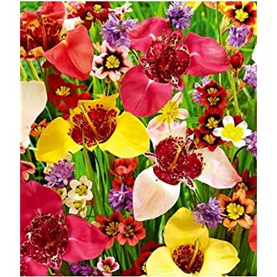 Humany flowerseeds- Butterfly Flower Collection Colorful Perennial Garden, Perennial Hardy Perennial Flower Seeds bee-Friendly Flower Mix for Balcony/Garden : Garden & Outdoor