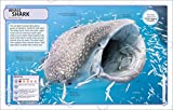 Sharks and Other Deadly Ocean Creatures Visual