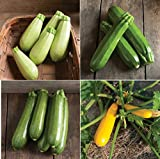 David's Garden Seeds Collection Set Zucchini Hybrid LP6555 4 Varieties...
