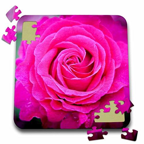 (3dRose Danita Delimont - Brian Jannsen - Flowers - Pink rose in the garden of Palais Royal, Paris, France. - 10x10 Inch Puzzle)