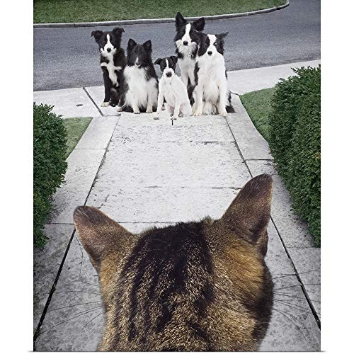 Collie Border Russell Jack (GREATBIGCANVAS Poster Print Entitled Cat Looking at a Jack Russell Terrier and Border Collies on The Sidewalk by 10