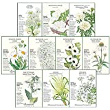 """Botanical Interests """"Over The Moon"""" Moon Flower Seed Collection - Ten (10) Packets with Gift Box"""