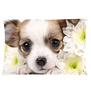 Adorable Chihuahua Puppy Custom Rectangle Soft Pillow Case Standard Size 16x24