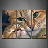 First Wall Art - Two Yellow Cat Wall Art Painting The Picture Print On Canvas Animal Pictures For Home Decor Decoration Gift