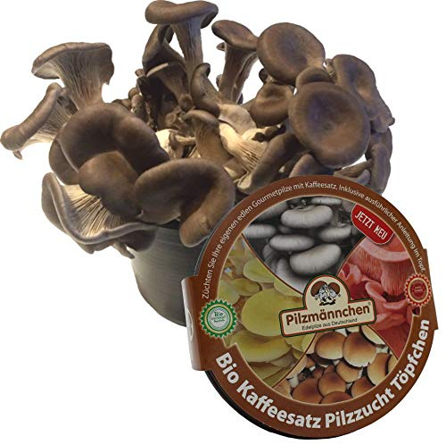 Austernpilz Kaffeesatz Pilzzucht-Töpfchen Bio Pilzmännchen