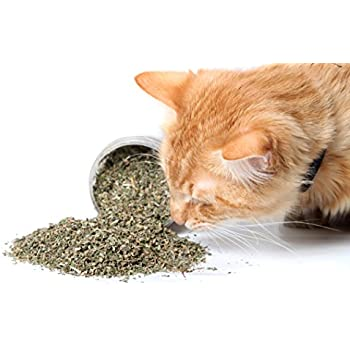 Catnip by Cat Crack, Premium Blend Safe for Cats, Infused with Maximum Potency your Kitty is Guaranteed to Go Crazy for! (1 Cup)