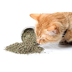 Cat Crack Catnip, Premium Blend Safe for Cats, Infused with Maximum Potency Your Kitty is Sure to Go Crazy for 1