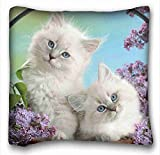 Custom Characteristic ( Animals Kittens small fluffy white Flowers ) Custom Zippered Pillow Case 16x16 inches(one sides) from Surprise you suitable for King-bed PC-Orange-1555