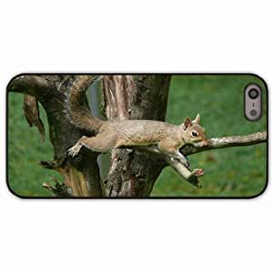 iPhone 5 5S Black Hardshell Case squirrel tail eyes wood branches Desin Images Protector Back Cover