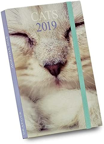 Draeger 72000151 – Agenda de bolsillo gatos 2019: Amazon.es ...