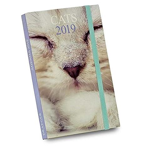 Draeger 72000151 - Agenda de bolsillo gatos 2019: Amazon.es: Oficina y papelería
