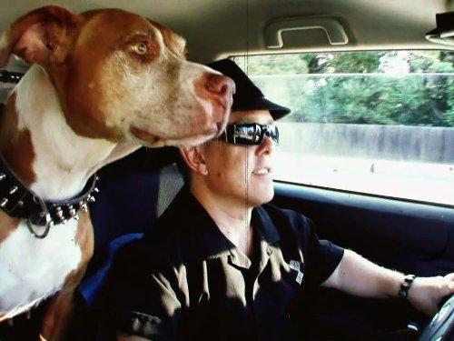 Dog Days at Shortywood (Commercial Dog Kennel)