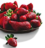 buy Organic Surecrop Strawberry 315 Seeds UPC 600188194753 + 1 Free Plant Marker - Low-Maintenance now, new 2019-2018 bestseller, review and Photo, best price $4.99