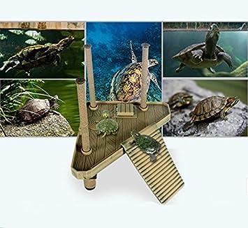 Plataforma acuario con rampa para tortugas reptiles tritones estanques pecera terrario de OPEN BUY: Amazon.es: Hogar