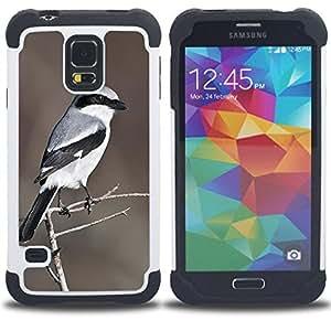"""SAMSUNG Galaxy S5 V / i9600 / SM-G900 - 3 en 1 impreso colorido de Altas Prestaciones PC Funda chaqueta Negro cubierta gel silicona suave (Patrón Pluma Gris Marrón White Bird"""")"""