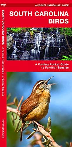 Southern Birds Backyard Guide Watching Feeding Landscaping