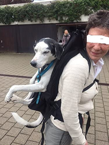 GRAN Bolsa para perros / Arnés de transporte para perros/ mochila ...