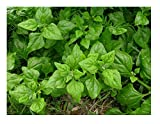 David's Garden Seeds Spinach New Zealand SL686 (Green) 100 Non-GMO, Heirloom Seeds