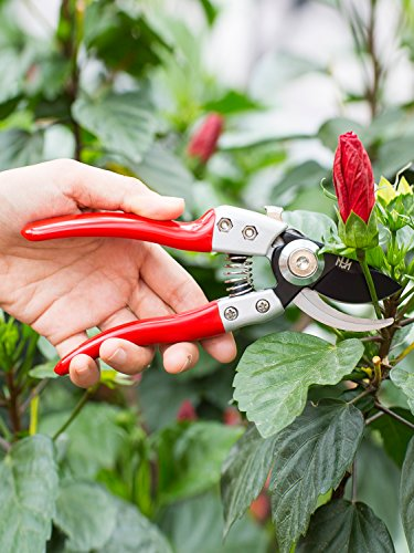 Ratchet Pruning Shears with Safety Lock, M&H garden 8'' Professional Tree Clippers, Sharp Anvil Hand Pruners Garden Shears, SK-5 Steel Blade, Less effort by M&H garden (Image #4)
