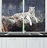 Ambesonne Tiger Kitchen Curtains, Albino Cat Sitting on Rock Sublime Nature Marvelous Animals Endangered Species, Window Drapes 2 Panel Set for Kitchen Cafe, 55 W X 39 L Inches, Slate Blue White Review