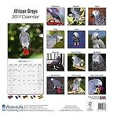 African Grey Calendar - African Grey Parrot