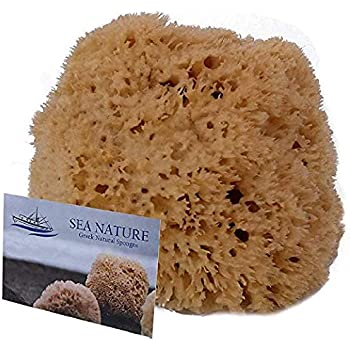 Amazon.com: Sea Nature Natural Sea Sponge Brand 5-6 Grada Type for ...