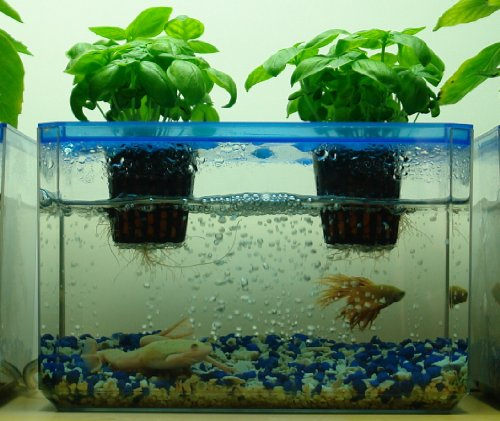 Amazoncom JrPonics FishGarden BubbleGarden Aquaponics
