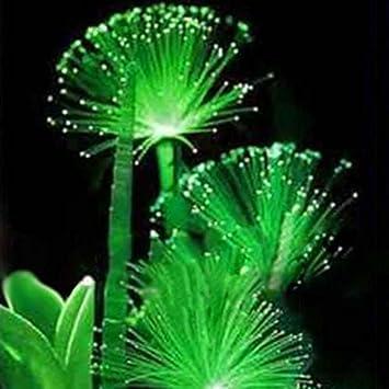 Wuwxiuzhzhuo 100 Semillas De Flores Esmeraldas Raras Plantas De