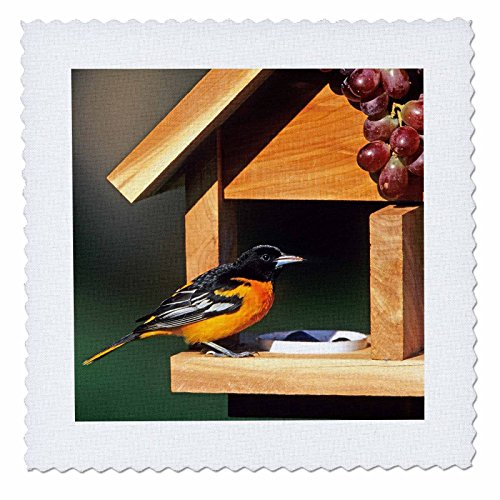 3D Rose Baltimore Oriole Male On Jelly and Grape Feeder Illinois Square 14 by 14 Inch Quilt, 14 x ()