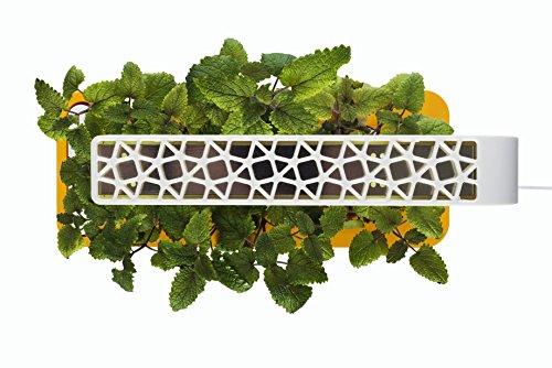 51rNuAfp%2BCL - Click & Grow Indoor Smart Herb Garden