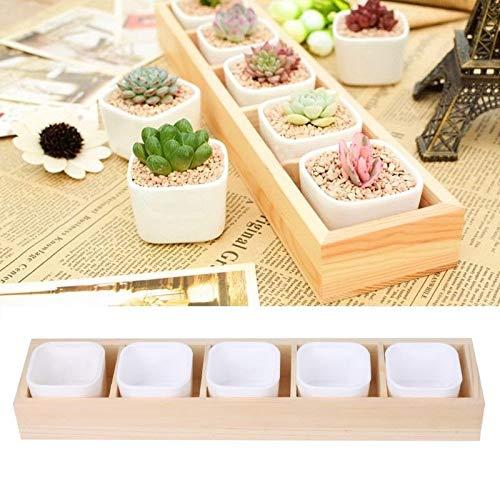 Succulent Plant Fleshy Flower Pot Square Box Decorative Container Garden Planter