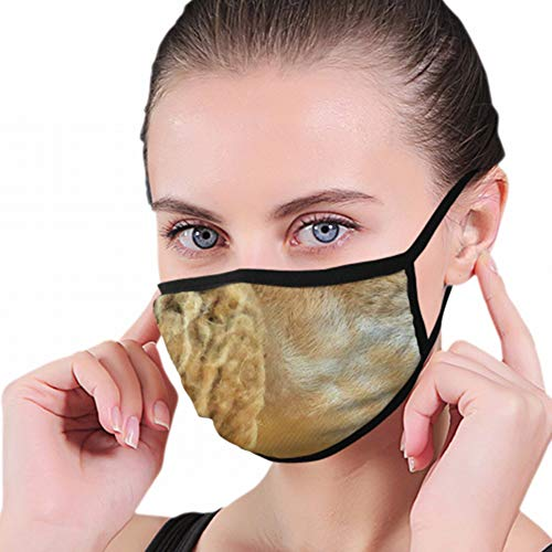 Sheep Farm Dolly Industrial Anti Pollution Dust Mask Washable And Reusable Polyester Face Mouth Mask Protection From Flu Germ Pollen Allergy Respirator Mask from Cool pillow