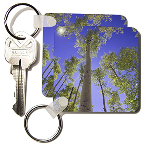 3dRose Aspen trees, Uncompahgre National Forest Colorado - NA02 RNU0236 - Rolf Nussbaumer - Key Chains, 2.25 x 4.5 inches, set of 2 - Clothing Shops Aspen