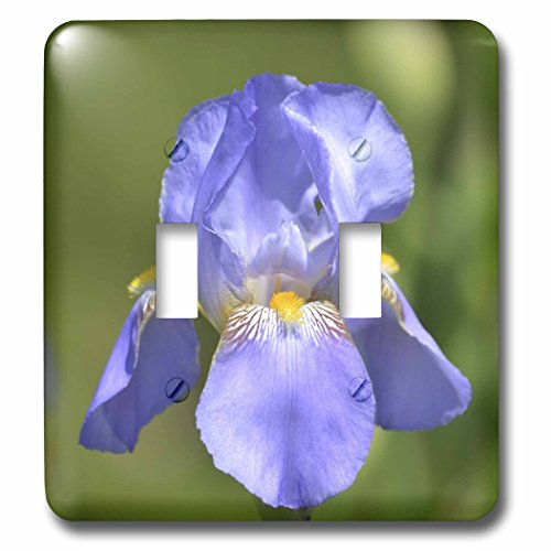 3dRose lsp_54453_2 Pretty Spring Iris Flower Floral Print Nature Photography Double Toggle Switch ()