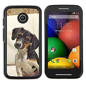 TECHCASE---Cubierta de la caja de protección para la piel dura ** Motorola Moto E ( 1st Generation ) ** --Jack Russell Terrier perro canino Mascota
