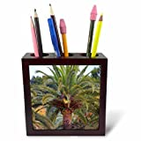 3dRose Danita Delimont - Trees - Palm trees within the grounds of Park Guell, Barcelona, Spain. - 5 inch tile pen holder (ph_257870_1)