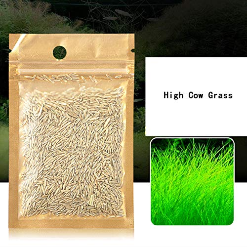 (Decorations - Aquatic Plant Waterweed 20g Water Grass Seed Aquarium Plant Cow/Love/Lucky Seed Fish Tank Plants 7 Kinds Decoration Ornament - by GTIN - 1 PCs)