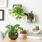 Dahey 6Inch 2Pcs Wall Hanging Flower Plant Pot Plastic Planter, Round + Square