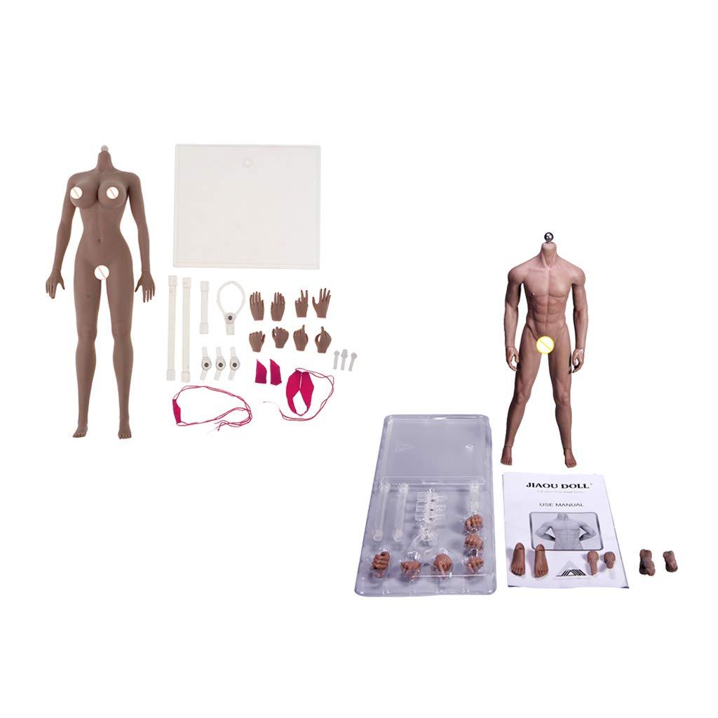 Fityle 1:6 Scale Super Flexible European Shape Male &Female Seamless Body Steel Skeleton