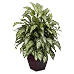 Silver Queen with Decorative Planter Silk Plant