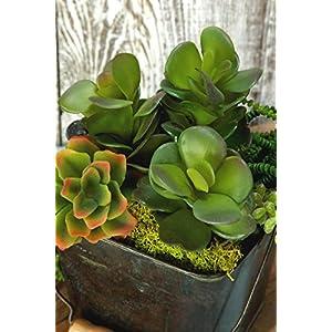 Succulent Pick Kalanchoe 8in - Excellent Home Decor - Indoor & Outdoor 44