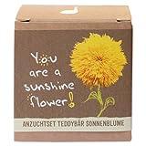 """Geschenk-Anzuchtset """"Sunshine Flower"""" - Teddybär Sonnenblume"""