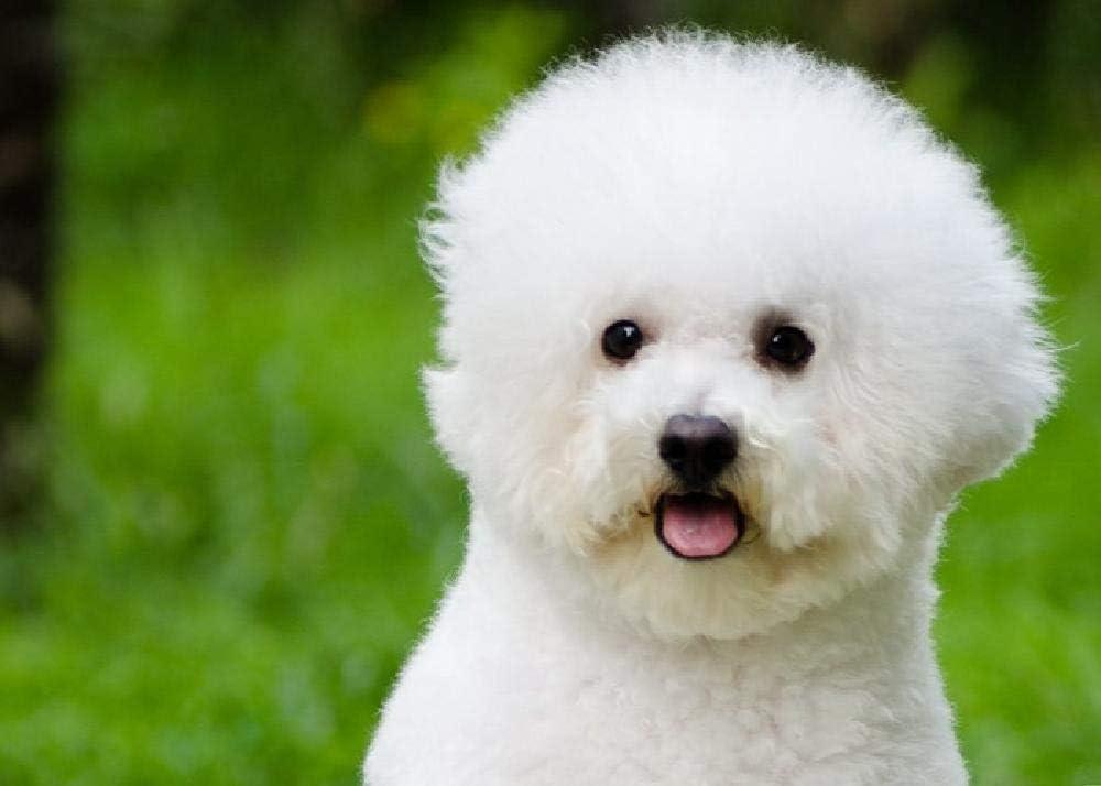Bichon Perro Mascota Juguetes Educativos para Niños Y Adultos Rompecabezas 1000 Piezas