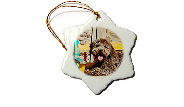 Amazon Com 3drose Orn 192391 1 Lagotto Romagnolo Lying On A Wooden Bench Snowflake Ornament Porcelain 3 Inch Home Kitchen