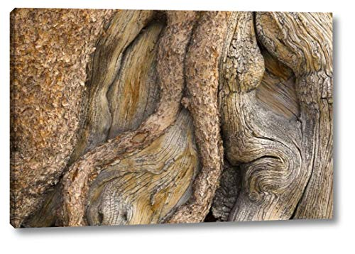 California, Inyo NF Gnarled Pine Tree Trunk by Don Paulson - 22